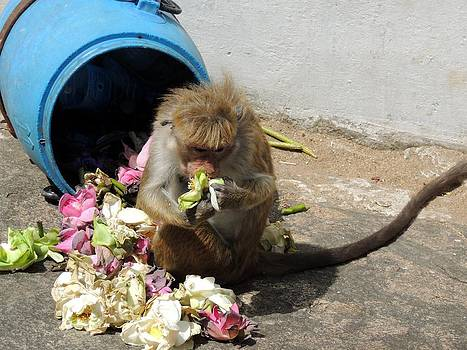 Cheeky Monkey by Heather Gordon