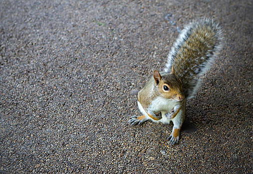 Fizzy Image - cheeky squirrel posing on the concrete floor