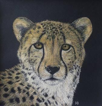 Cheetah by Barbara Bird