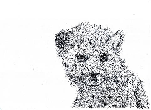 Cheetah Cub by Karl Addison