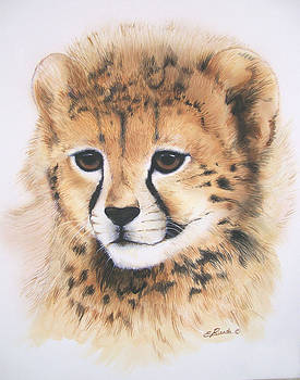 Cheetah Cub Portrait by Edwin Rosado