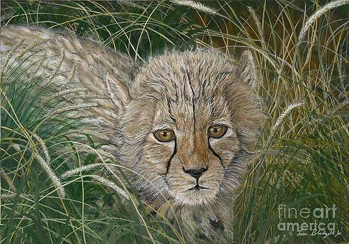Cheetah Cub by Tom Blodgett Jr