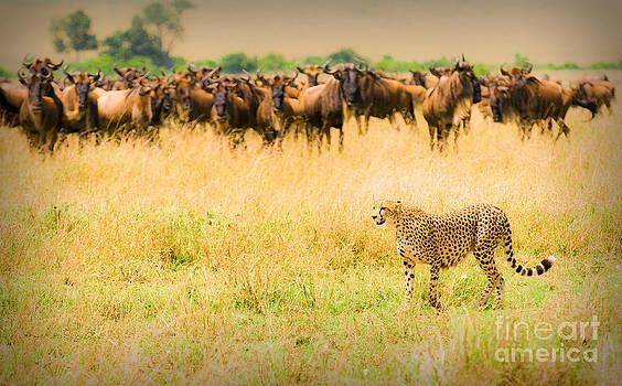 Cheetah Hunting by Konstantin Kalishko