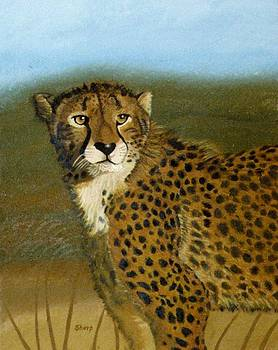 Cheetah by Karen Sharp