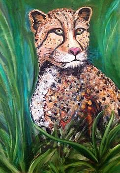 Cheetah by Melanie Wadman