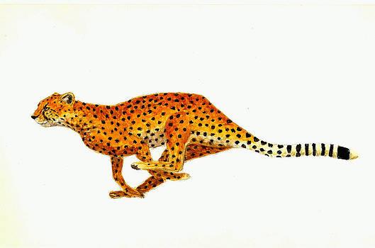Cheetah by Michael Vigliotti