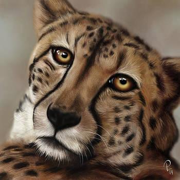 Cheetah by Pia Langfeld