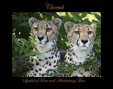 Cheetah Symbol of by Marty Maynard