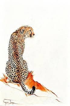 Cheetah by Vanessa Lomas