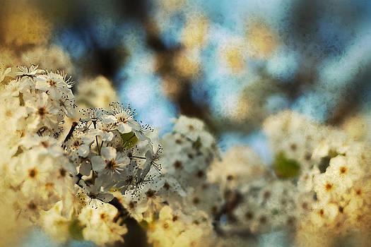 Cherry Blossom II by Kim Zier