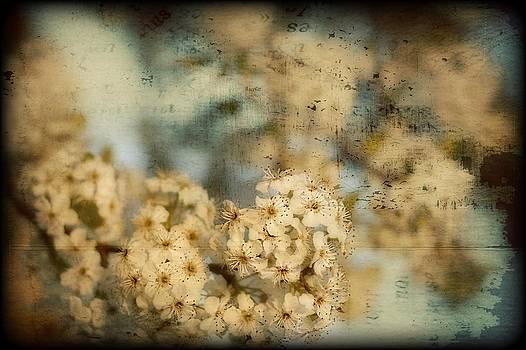 Cherry Blossom by Kim Zier