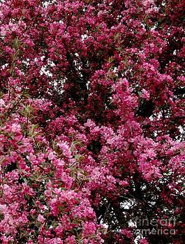 Gail Matthews - Cherry Blossom Reds and Pinks