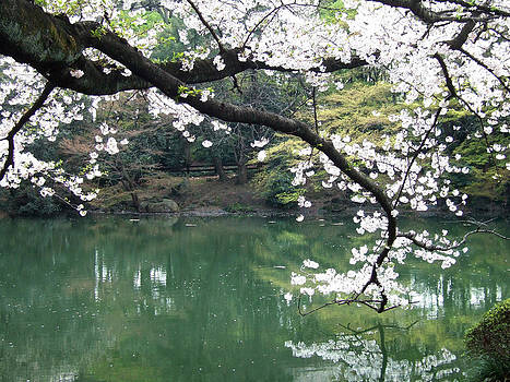 Cherry Blossom Reflection Tokyo by Doveen Schecter
