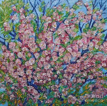 Cherry Blossom by Sloane Keats