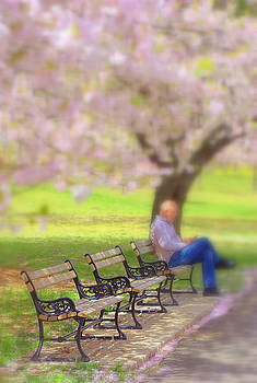 Cherry Blossoms and Benches by Judy Salcedo