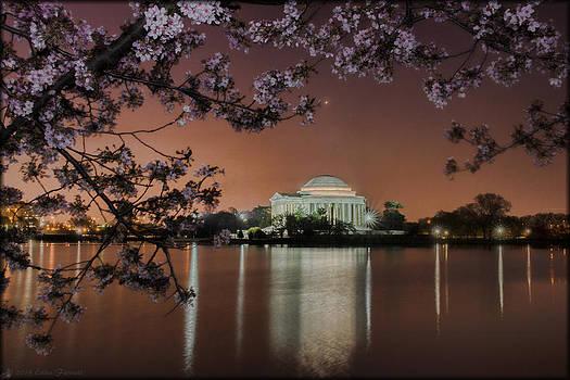 Erika Fawcett - Cherry Blossoms