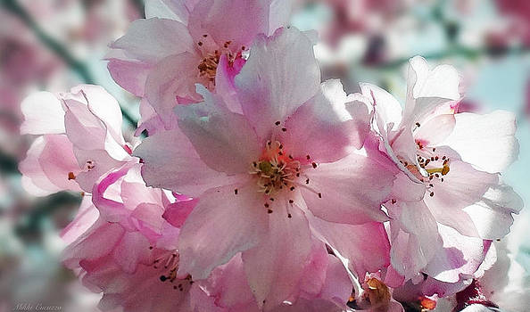 Cherry Blossoms galore by Mikki Cucuzzo