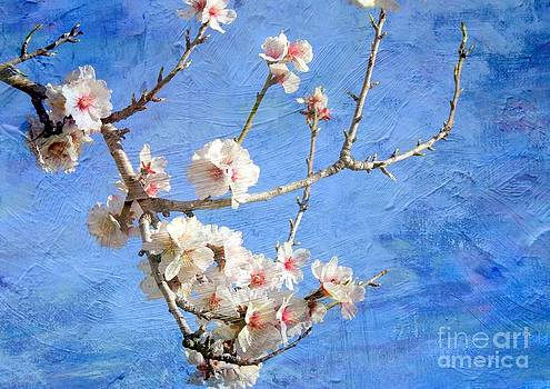 Cherry blossoms in spring by Blanchi Costela