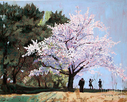 Cherry Blossoms  No 4 by Joan McGivney