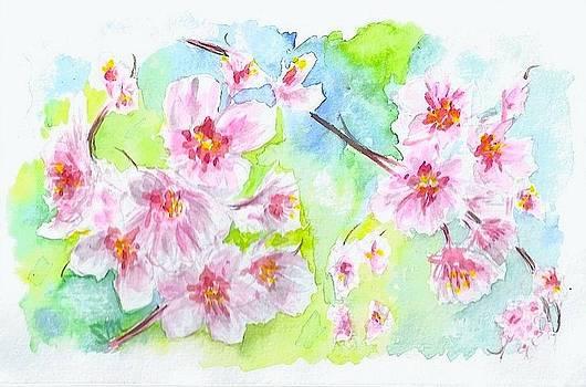 Cherry blossoms by Sabina Mollot