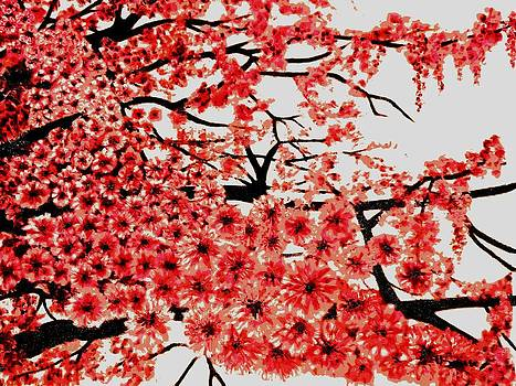 Cherry Blossoms by Victoria Rhodehouse