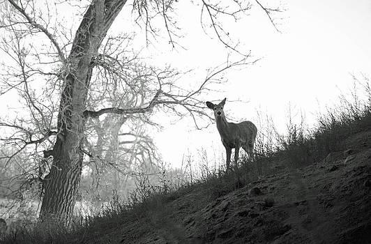 Robert Meyers-Lussier - Cherry Creek Wilderness