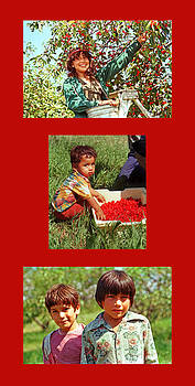 Cherry Harvest of 1982 by James Rasmusson