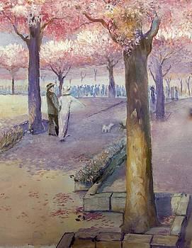 Cherry park  by Timo Luomanpera