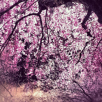 Yen - Cherry Pink