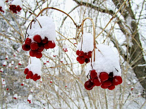Cherry Red Berry Bell's of Snow by Jack  Martin