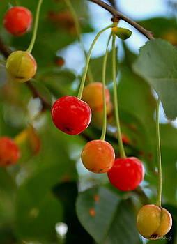Cherry time by Marija Djedovic