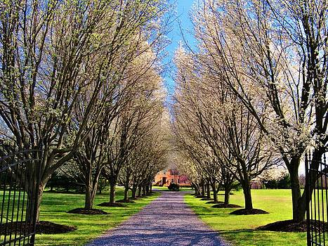 Cherry Tree Lane by Joyce Kimble Smith