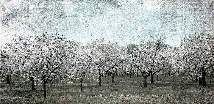 Cherry Trees by Mary Underwood
