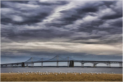 Erika Fawcett - Chesapeake Bay Bridge