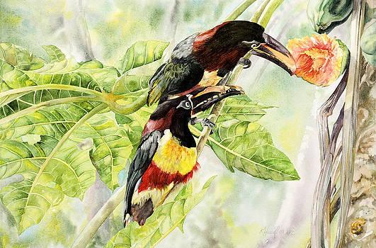 Chestnut-eared Aracaris by Kitty Harvill