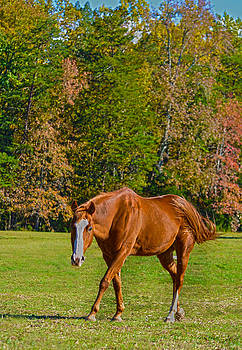 Chestnut Red Horse by Sandi OReilly
