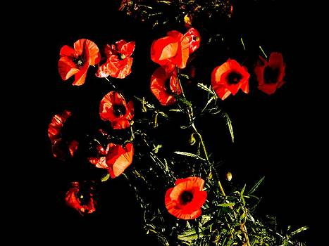 Bishopston Fine Art - Chiaroscuro Poppies