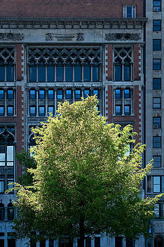 Chicago Tree and Facade by James Blackwell JR