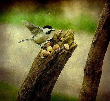 Chickadee and the Fly by Amanda Struz
