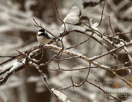 Chickadee by Brenda Leitow