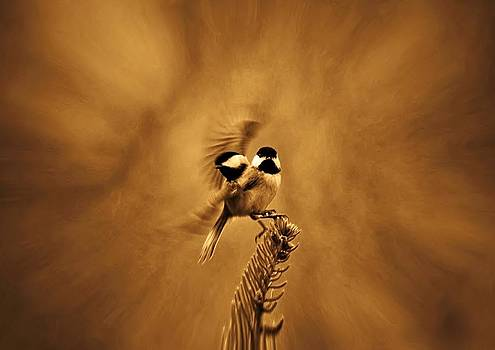 Chickadee by Robert Geary