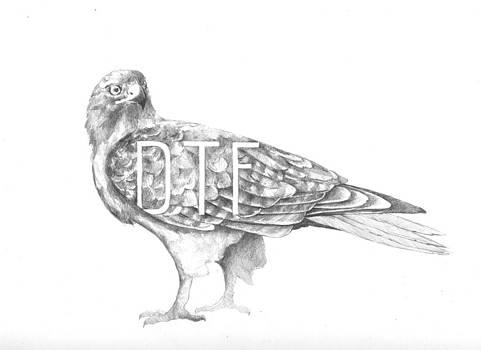 Chicken Hawk by Alexander M Petersen