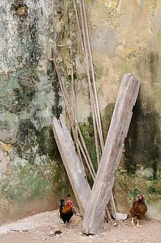 Chickens in the Corner in Havana Cuba by Rob Huntley