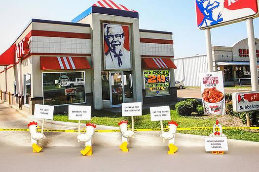 Chickens Picket by Tony Sullivan