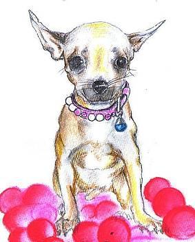 Chihuahua by Aida Novosel Savic