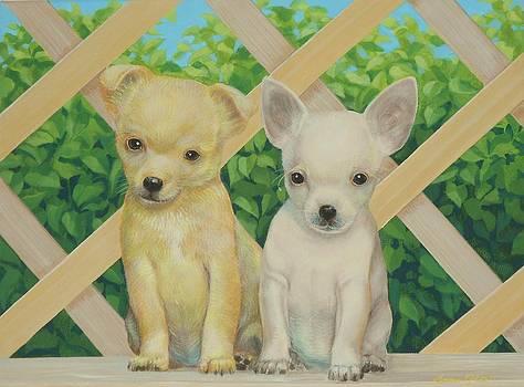 Chihuahua  Amigos  by Bonnie Golden