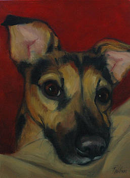 Chihuahua Face by Pet Whimsy  Portraits