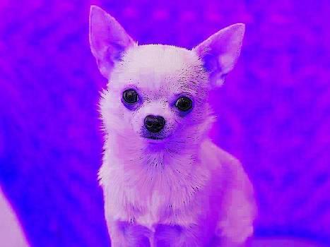 Chihuahua by Kathy Budd
