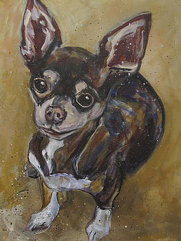 Chihuahua by Mary Gallagher-Stout