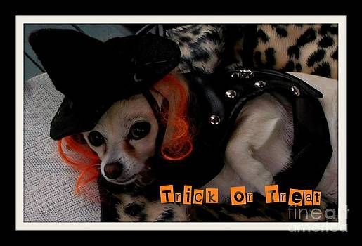 Gail Matthews - Chihuahua Trick or Treat